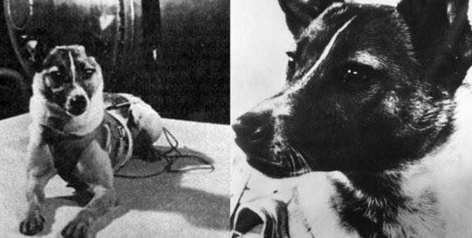 Laika: El primer ser vivo en viajar al espacio