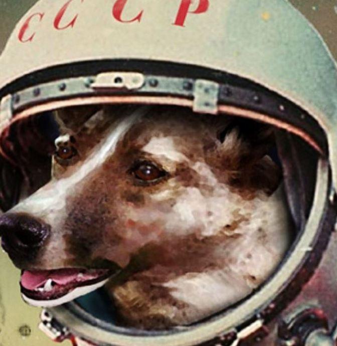 Se cumplen 60 años del primer lanzamiento de un ser vivo al espacio: La perrita Laika