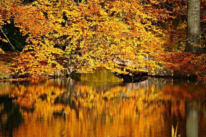 autumn autumn colours bridge colorful